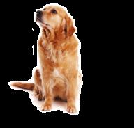 Dog Logo Png