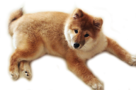 Dog Png Clipart Ready To Sleep