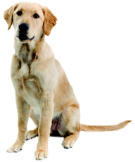 Dog Png For Web