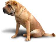 Dog Png Sitting