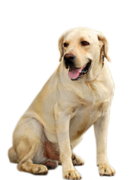 Dog Searching Png
