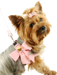 Dog With Ribbon