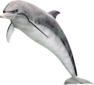 Dolphin Jumping Png Image Free