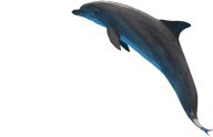 Dolphin Jumping Png