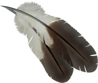 Drawed Feather Png