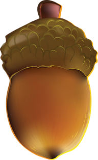 Drawn Acorn Png free image Download