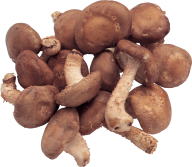 dried mushroom free download png