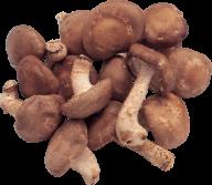 dried mushroom free download png