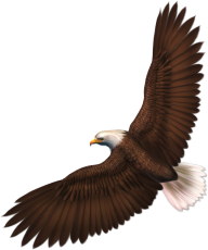 eagel png free download 1