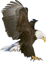 eagel png free download 10