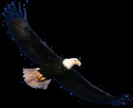 eagel png free download 14