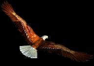 eagel png free download 15