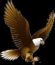 eagel png free download 16