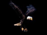 eagel png free download 17