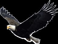eagel png free download 20