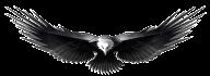 eagel png free download 22