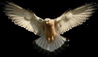 eagel png free download 27