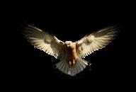 eagel png free download 9