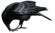 Eating Crow Png