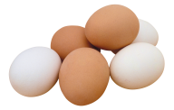 egg png free download 16