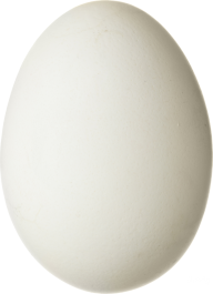 egg png free download 24
