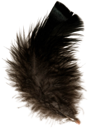 Feather Brownish Free PNG Download