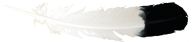 Feather Drawing Png Image