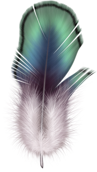 Feather Png Download Image