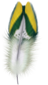 Feather PNG Image Download