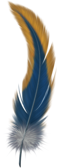 Feather Transparent Image