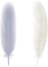 Feathers PNG Download