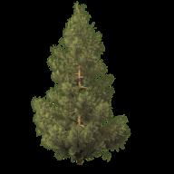 Fir Tree Free PNG Image Download 1