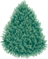 Fir Tree Free PNG Image Download 10