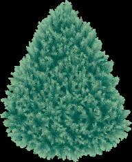 Fir Tree Free PNG Image Download 10