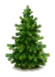 Fir Tree Free PNG Image Download 13