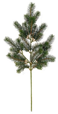 Fir Tree Free PNG Image Download 14