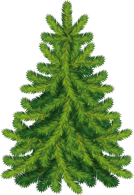 Fir Tree Free PNG Image Download 15
