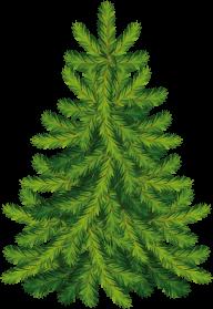 Fir Tree Free PNG Image Download 15