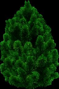 Fir Tree Free PNG Image Download 16