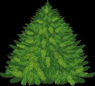Fir Tree Free PNG Image Download 19