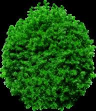 Fir Tree Free PNG Image Download 2