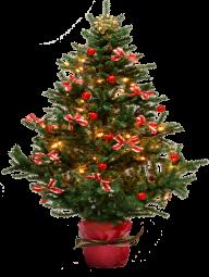 Fir Tree Free PNG Image Download 23