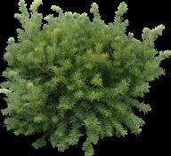 Fir Tree Free PNG Image Download 27