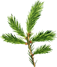 Fir Tree Free PNG Image Download 28