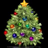 Fir Tree Free PNG Image Download 4