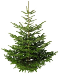 Fir Tree Free PNG Image Download 6
