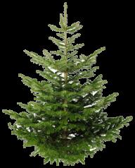Fir Tree Free PNG Image Download 6