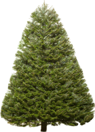 Fir Tree Free PNG Image Download 7