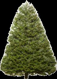 Fir Tree Free PNG Image Download 7