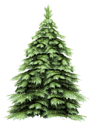 Fir Tree Free PNG Image Download 8